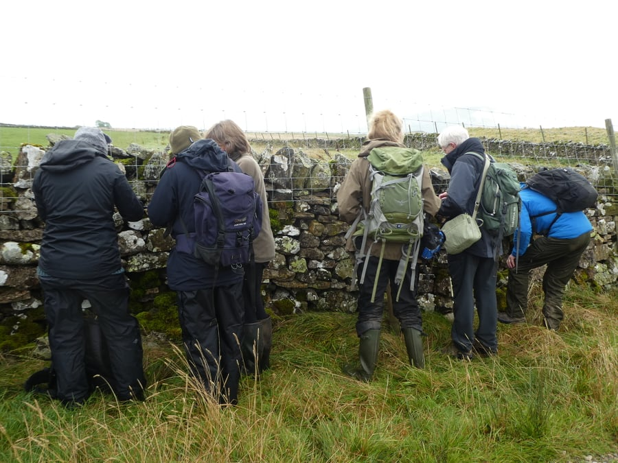 Cumbria Lichen and Bryophyte Group at Eycott Hill
