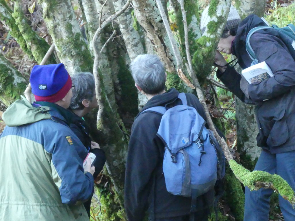 CLBG lichenologists inspecting a hazel