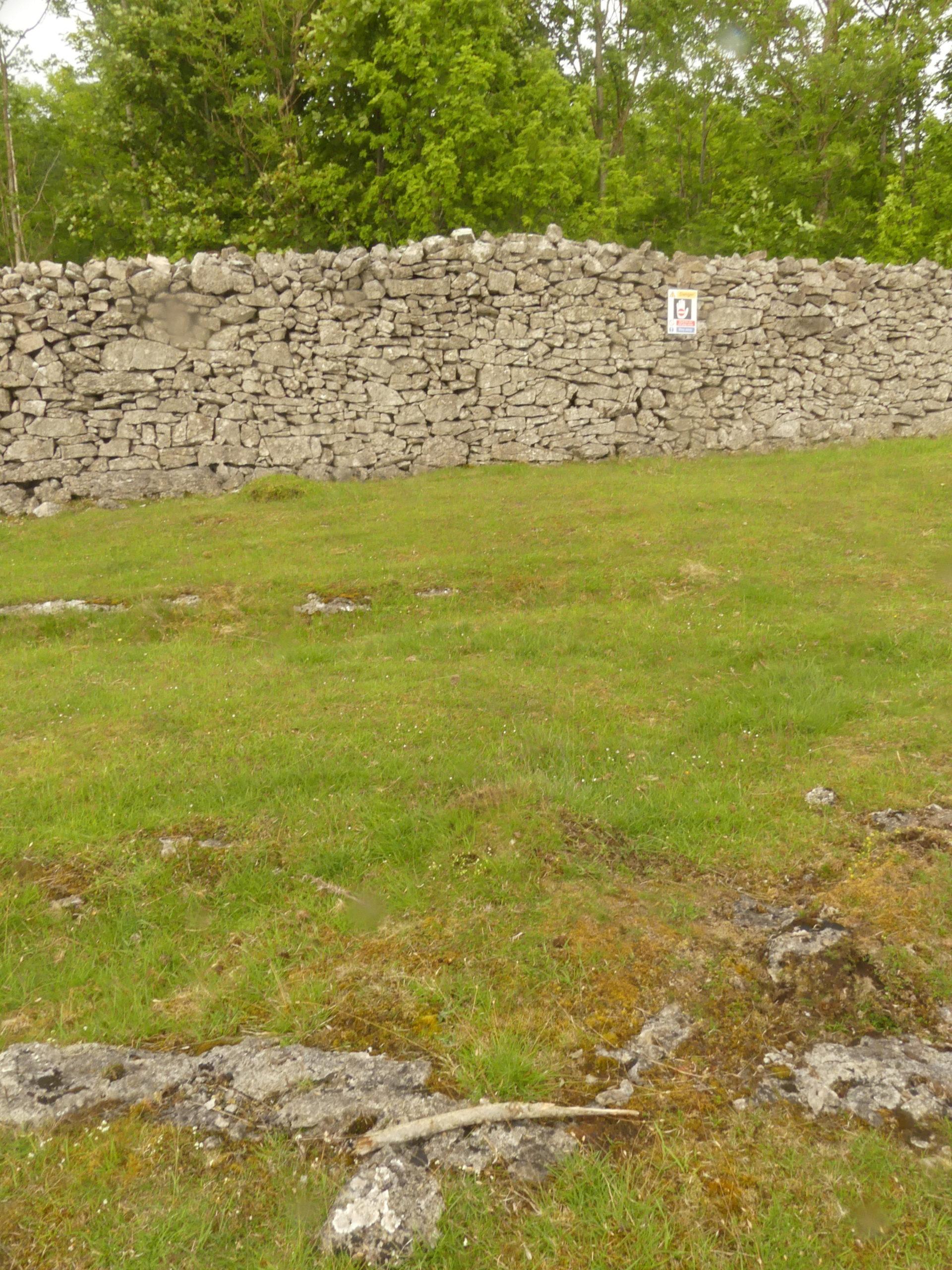 Peltigera leucophlebia limestone pavement habitat