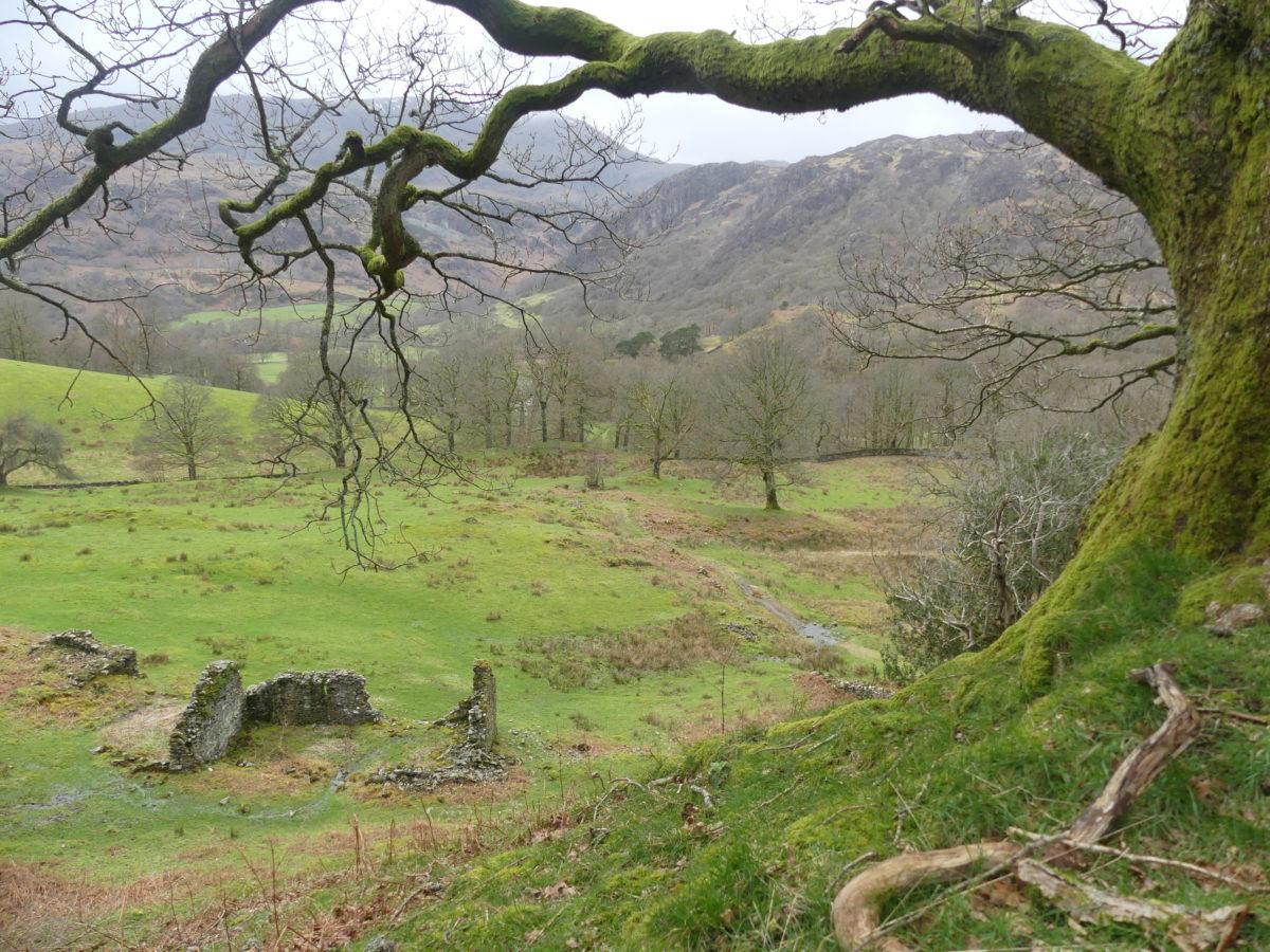 Tom Gill parklands near Tarn Hows
