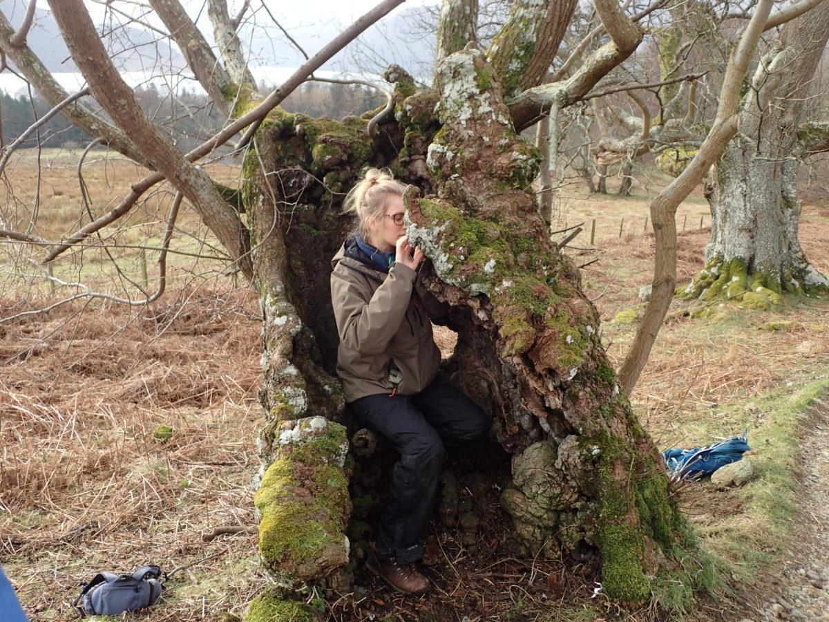 Wych elm near Aira Force