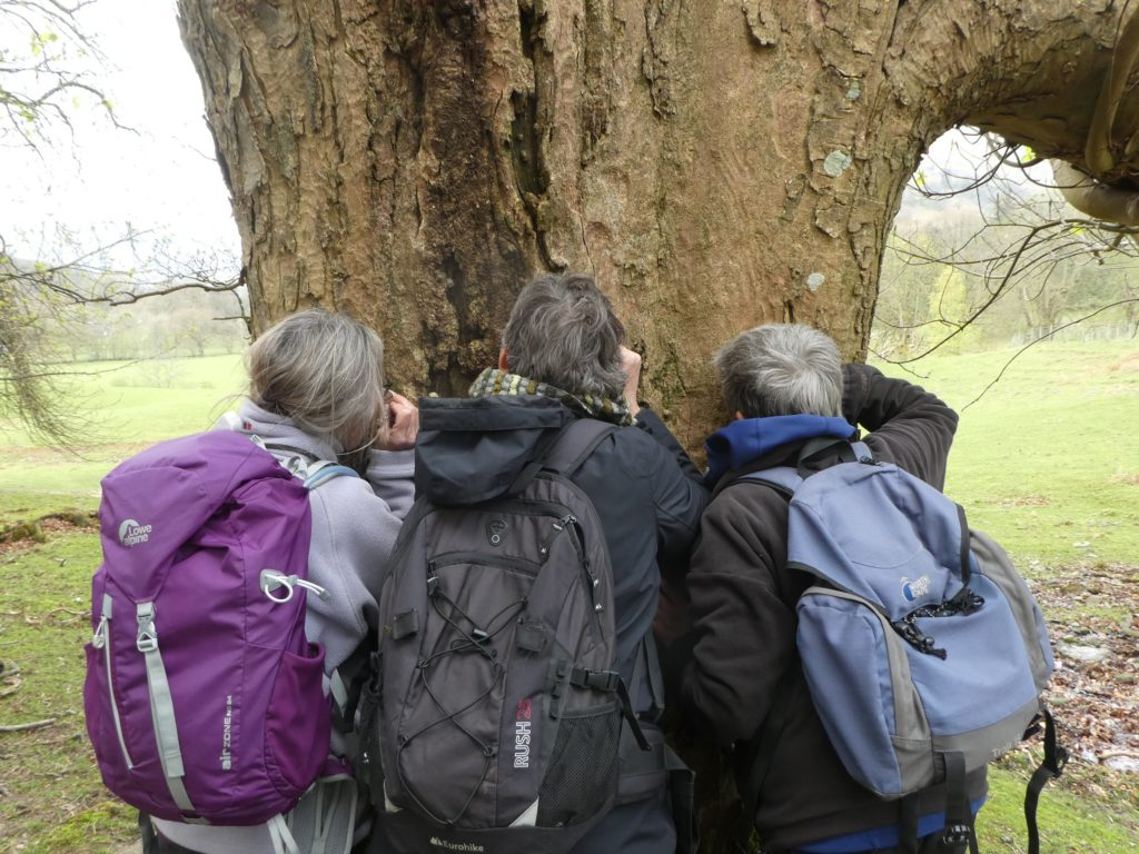 Looking for lichens at Rydal - April Windle