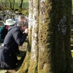 Examining rare lichens on a tree at Rydal Park, near Ambleside in 2019