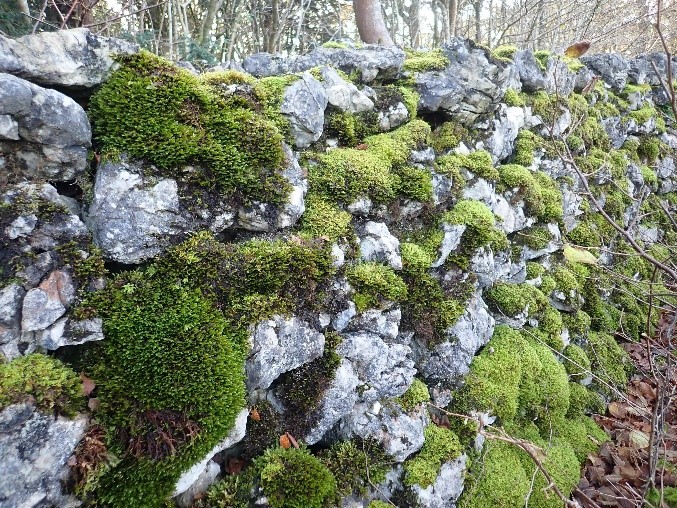 Bryophyte habitats on stone walls, rocks and remains of limestone pavement