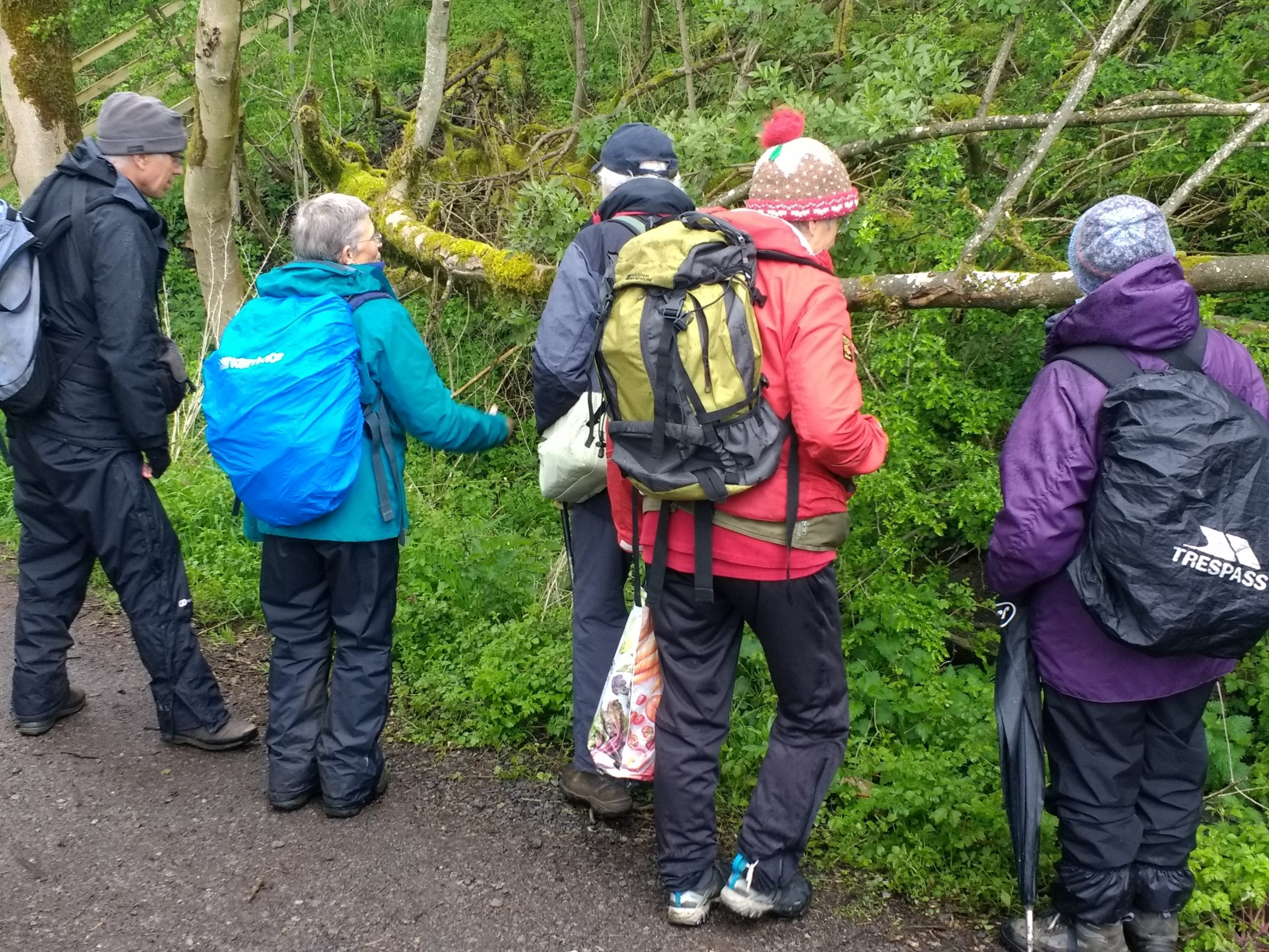 Looking at lichens on a tree branch