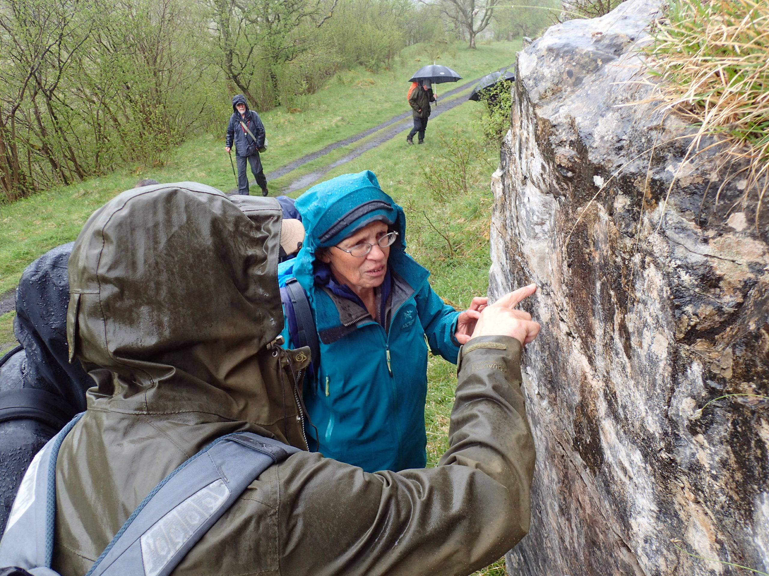 Looking at lichens on the Smardale limestone outcrops