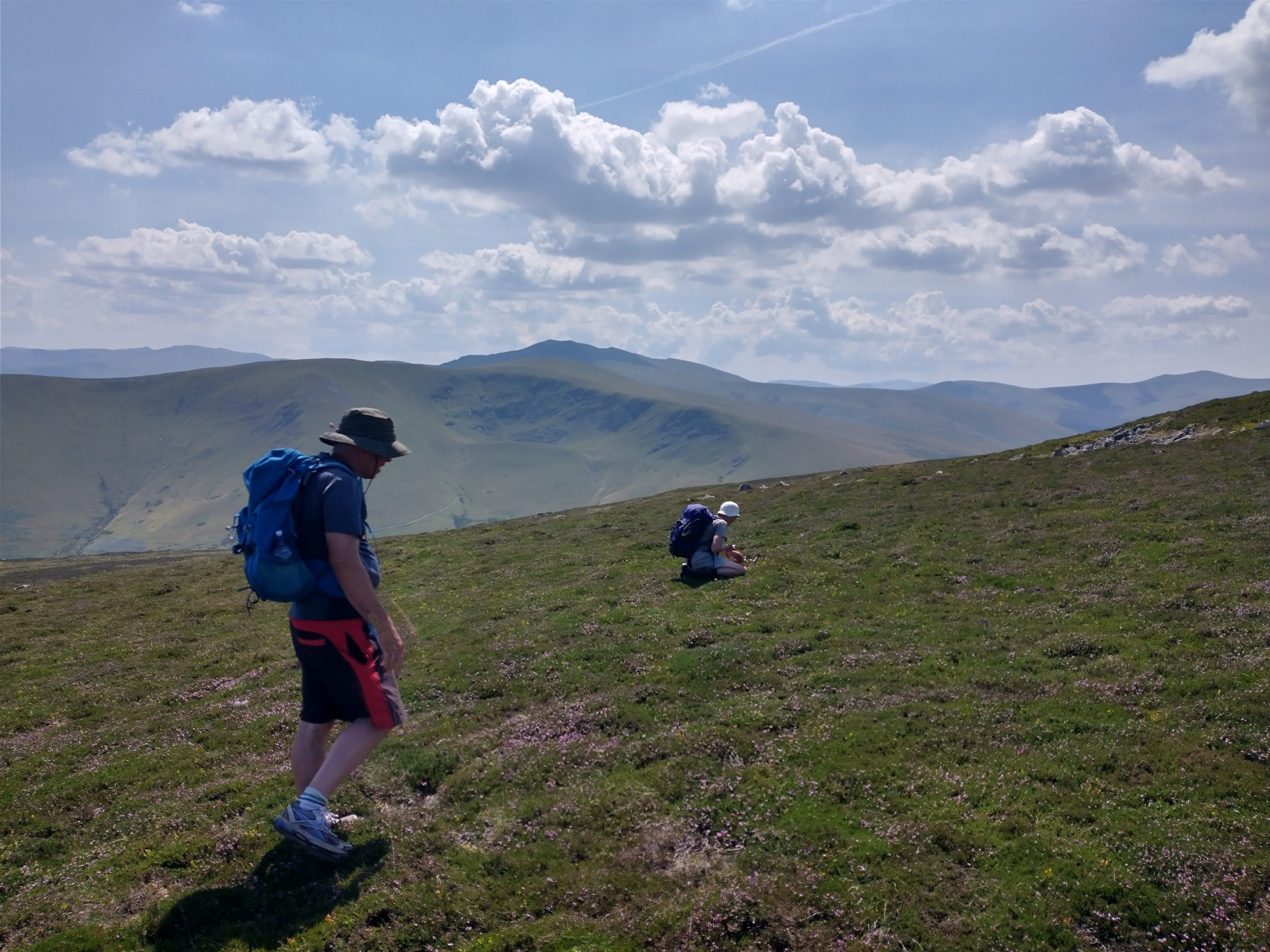 Searching the montane heath for lichens