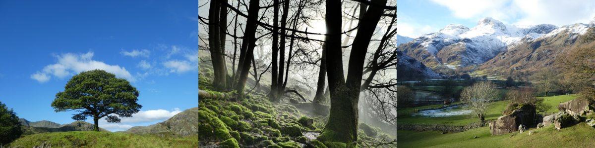 NY30 lichen landscape montage